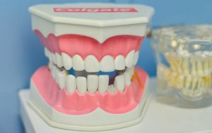 how much does dental insurance cover